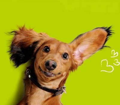 Dog Dog: Dog